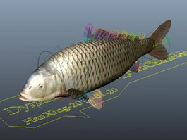 Carp Fish Rigged 3d model