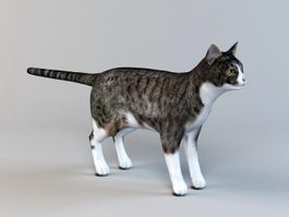 Tabby Cat 3d preview