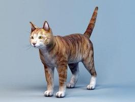 Orange Shorthair Tabby 3d model