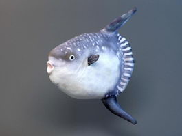 Animated Hoodwinker Sunfish Rig 3d model