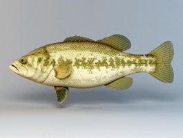 Freshwater Black Bass 3d model