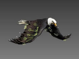 Bald Eagle Flapping Animation 3d model