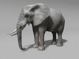 Grey Elephant 3d model