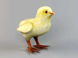 Baby Chick 3d model