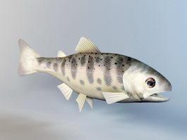 Trout Fish Rig 3d model