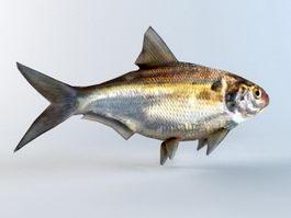 Animated Shad Fish Rig 3d model