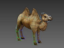 Bactrian Camel Animated & Rig 3d model