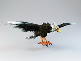 The Bald Eagle 3d model