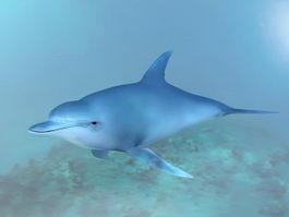 Ocean Dolphin 3d model