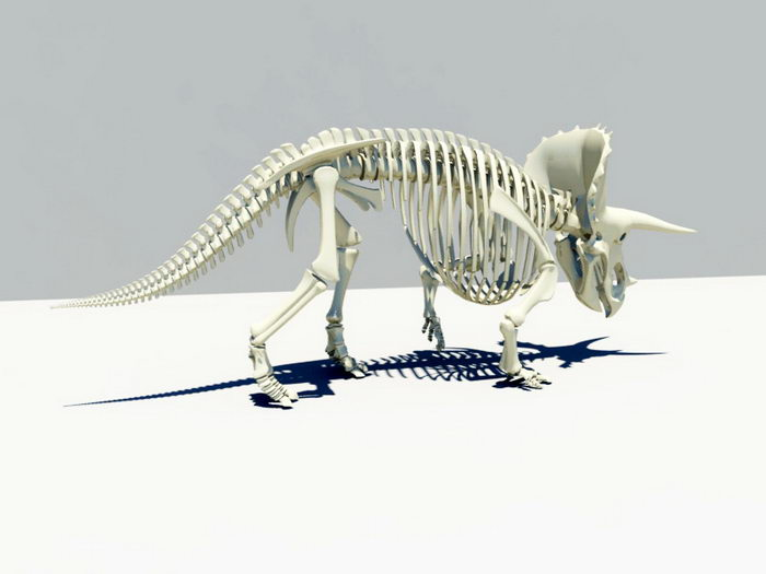 Triceratops Skeleton 3d model Maya files free download