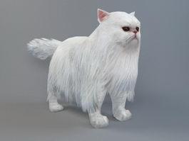 Persian Cat 3d model