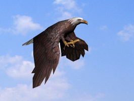 Eagle Gliding Animation 3d model