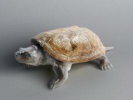 Florida Turtle 3d model