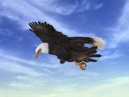 Animated Eagle Attack 3d model