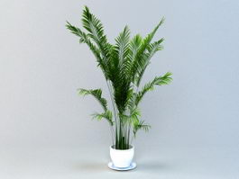 Areca Palm Potted Plant 3d model