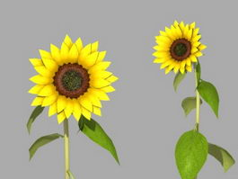 Sunflowers Plant 3d model