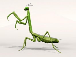 Asian Praying Mantis 3d model