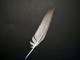 Goose Feather 3d model