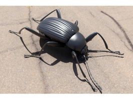 Dascilloidea Beetle 3d model