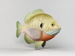 Bluegill Fish 3d model