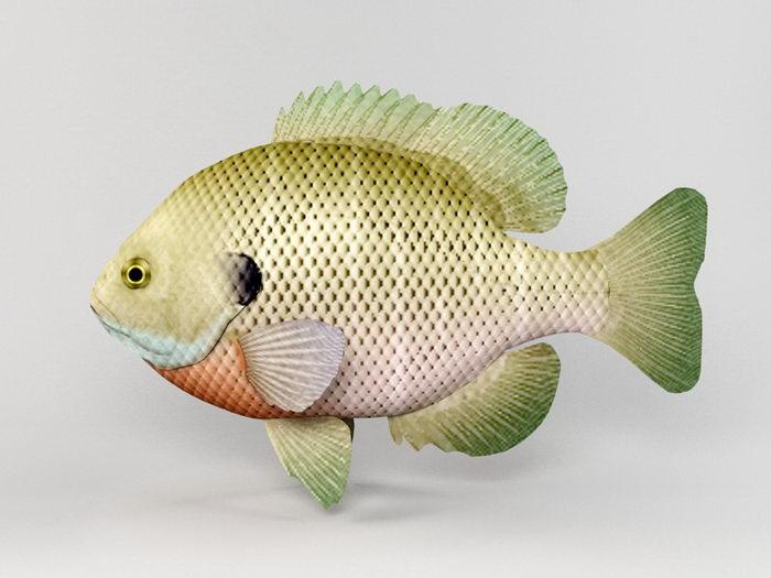 Bluegill Fish 3d rendering