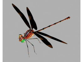 Brown Dragonfly 3d model
