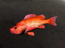 Animated Rockfish Rig 3d model