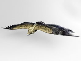 Animated Eagle Rigged 3d model
