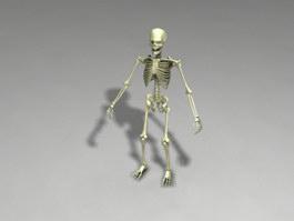 Full Human Skeleton 3d preview