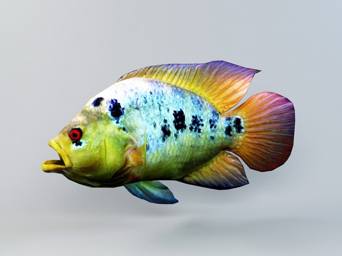 Rainbow Cichlid Fish Animated 3d rendering