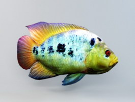 Rainbow Cichlid Fish Animated 3d preview