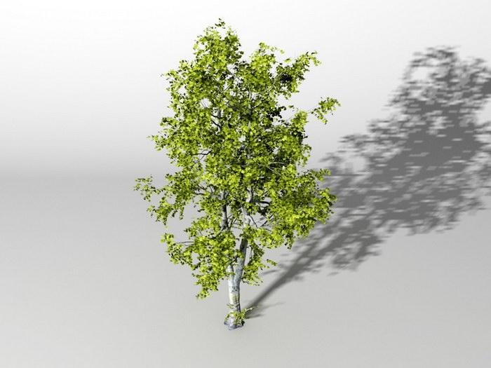American Ash Tree 3d rendering