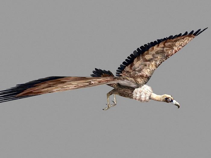 Condor Vulture Low Poly 3d rendering