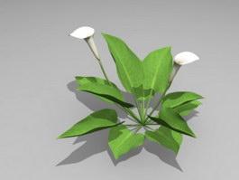 White Calla Lily Plant 3d preview