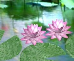 Water lilly 3d model preview