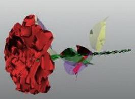 Rugosa rose 3d model preview