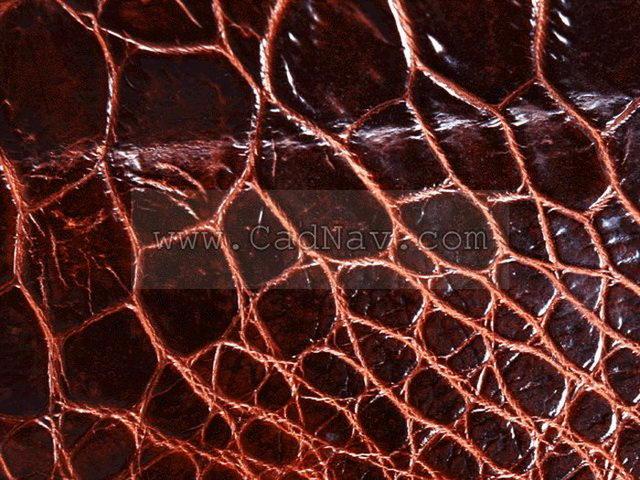 Inner squama texture