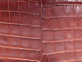 Snake skin material texture