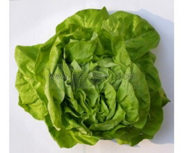 Green vegetables texture