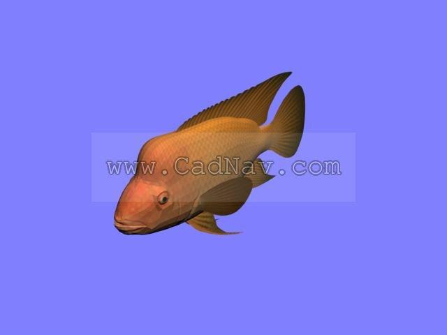 Red Devil fish 3d rendering
