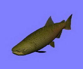 Chinook salmon 3d preview