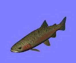Steelhead fish 3d model preview