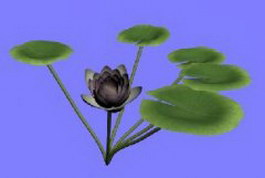 Water Lilies 3d preview