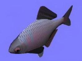 Tanago fish 3d model preview
