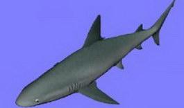 Shark 3d preview