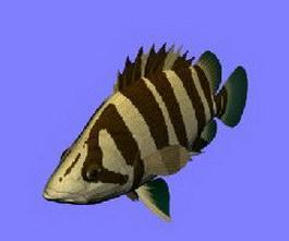 Siamese Tiger fish 3d model preview