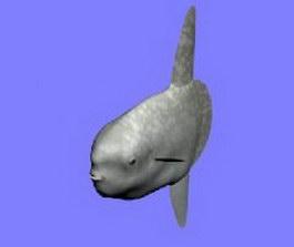 Manbou sunfish 3d model preview
