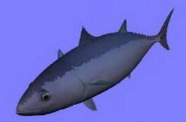 Tuna fish 3d model preview