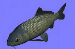 Koi fish 3d model preview