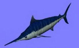 Sharks 3d model preview